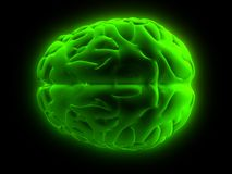 3d brain. 3d rendered human brain model Royalty Free Stock Photos