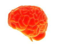 3d brain. 3d rendered human brain model Royalty Free Stock Photo