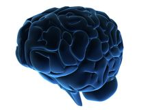 3d brain Royalty Free Stock Photos