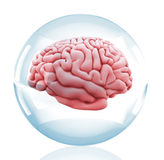 3D Brain in a crystal ball Royalty Free Stock Images