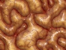 3d brains. 3d background texture of some brains - very realistic, and kind of nasty if this sort of thing grosses you out Stock Photo