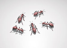 3D Bugs. Five 3D red ants ,bugs Royalty Free Stock Image
