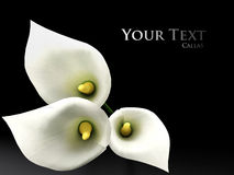3D callas. On the black backgraund Stock Photography