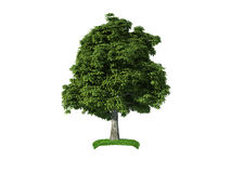 3d chestnut tree Stock Image