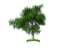 3d crying iva tree Stock Photo
