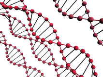 3d dna. 3d  isolated dna on the white background Royalty Free Stock Photography