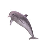 3D Dolphin Stock Photos