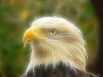 3d eagle. Combined photography and 3D toon render of an eagle head Royalty Free Stock Image