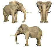 3d elephant isolated on white Royalty Free Stock Photo