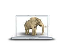 3D elephant on laptop. Screen isolated on white back Stock Photography