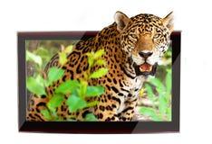 3D fauna selvatica TV Immagini Stock Libere da Diritti