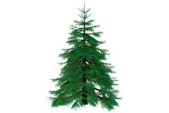 3d fir tree render isolated. 3d fir conifer tree render isolated Stock Photography
