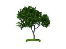 3d framför den små treen royaltyfri foto
