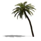 3D geef van een palm terug Royalty-vrije Stock Foto