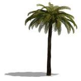 3D geef van een palm terug Stock Afbeeldingen