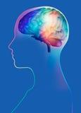 3d geef van hersenen in womanshoofd terug Royalty-vrije Stock Afbeeldingen