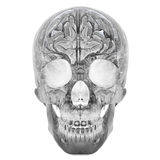3D Glass Crystal Skull. 3d glass crystal human skull, isolated Stock Photography