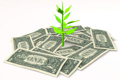 3D graphics, growth, money, dollar bills, wealth,  Royalty Free Stock Image