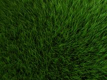 3d grass Royalty Free Stock Photo