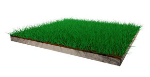 3d grass lawn. On white background Stock Photography