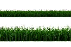 3d grass line isolated on white. Background Stock Photo