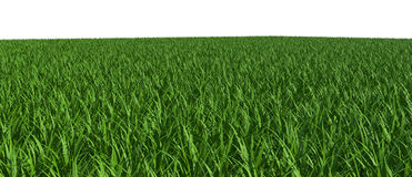 3d green field. With white background Royalty Free Stock Photography