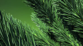 3D. Green Firtree Royalty Free Stock Image