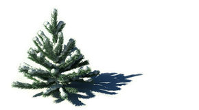 3D. Green Firtree With Snow. 3D Render of Green Firtree With Snow Stock Photo