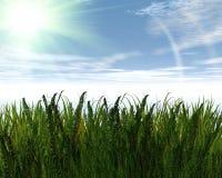 3D Green Grass And Blue Sky