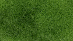 3d green grass background texture. Royalty Free Stock Photo