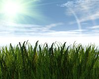 3D green grass and blue sky. Creative abstract background Stock Image