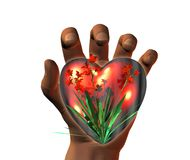 3D heart on 3D hands Stock Photos