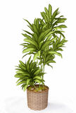 3D House Plant Stock Images