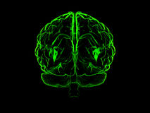 3d human brain. High resolution image. 3d rendered illustration. 3d human brain Royalty Free Stock Photos