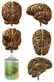 3D Human Brain Stock Photo