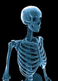 3D human skeleton Stock Photo