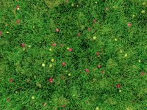 3D image of grass and small flowers. A texture image of grass and small flowers is rendered by free (open source ) computer graphics software, Blender Royalty Free Stock Image