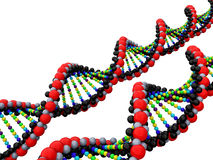 3d isolated dna. On the  white background Royalty Free Stock Photo