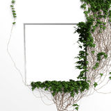 3d ivy frame. 3d ivy window white frame background Royalty Free Stock Photography