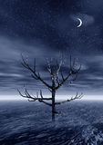 3d landscape with lonely tree. Night. 3 d graphics night fantasy landscape with lonely tree Stock Photography