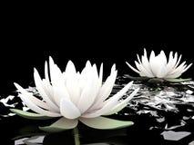 3d lotuses op water Vector Illustratie