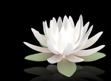 3d luminous lotus. On a black background Royalty Free Stock Photography