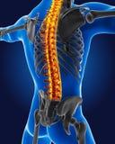 3D medische mens met skelet Royalty-vrije Stock Fotografie