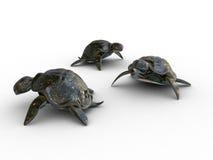 3d modeluje żółwie Fotografia Stock