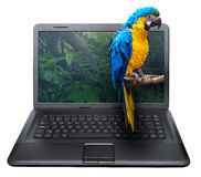 3D Notebook. With Ara Parrot on the Screen - isolated on White Stock Image