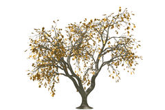 3d oak tree render with gold leaf. 3ds max graphic oak tree render on isolated white background with rusty leaf Royalty Free Stock Photos