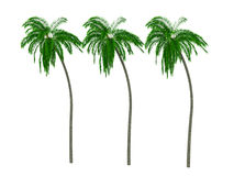 3d palmy Zdjęcie Stock