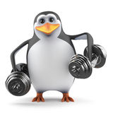 3d Penguin lifts dumbells Royalty Free Stock Images