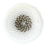3d Render Dandelion Seeds Fibonacci Sequence. Viewed from the top, dandelion seeds with the sphere of puffy flying things that everyone loves so much. 3d Royalty Free Stock Image