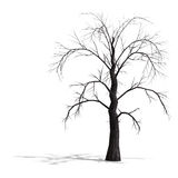 3D Render of a dead tree without leafs Stock Photo